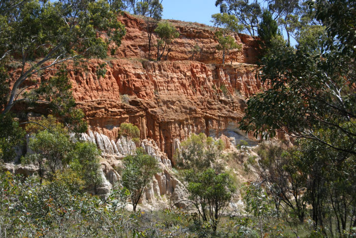 """Sand cliff face remaining from sand mining provides nesting locations for martins. Photo courtesy of the <a href=""""https://www.walkingtrailssupportgroup.org.au/"""">Walking Trails Support Group</a>"""
