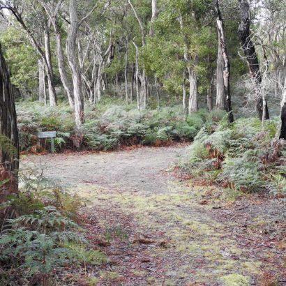Stringybark Forest Hike, Telford Scrub Conservation Park