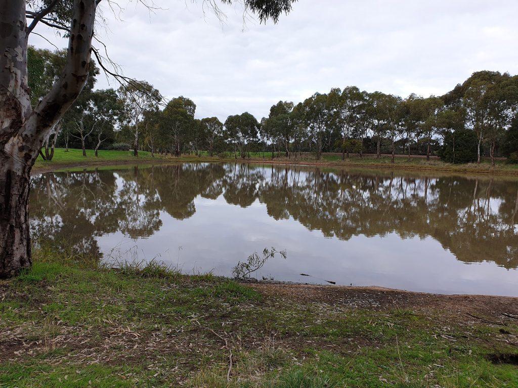 The Kaurna Park Wetlands is a creek system of shallow billabongs
