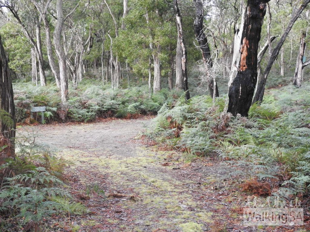 The two trails in Telford Scrub Conservation Park are well marked and easy to follow