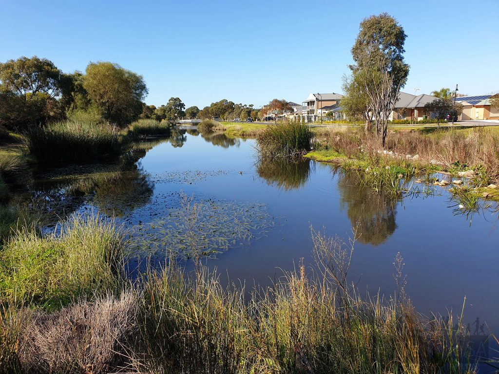The wetlands at Springbank Boulevard Reserve have plenty of ducks and other waterfowl, and lots of benches to sit and watch from