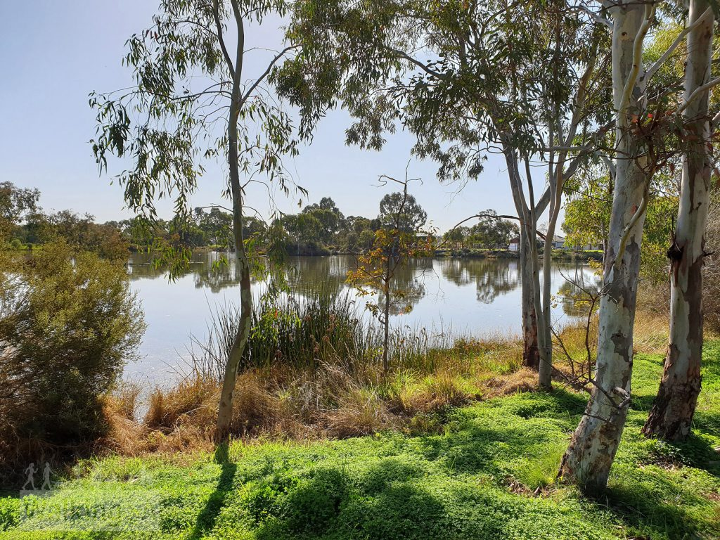 Views of the wetlands at Springbank Boulevard Reserve
