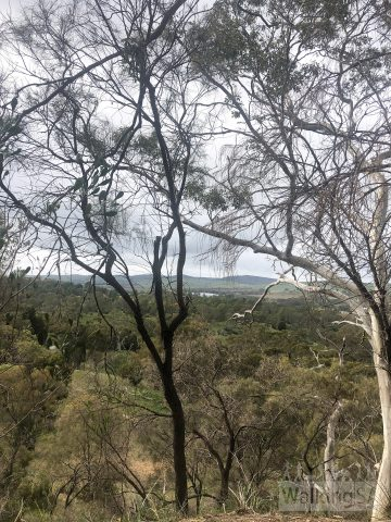 Views over the Barossa from the Black Chinned Honeyeater Trail and Firetail Track