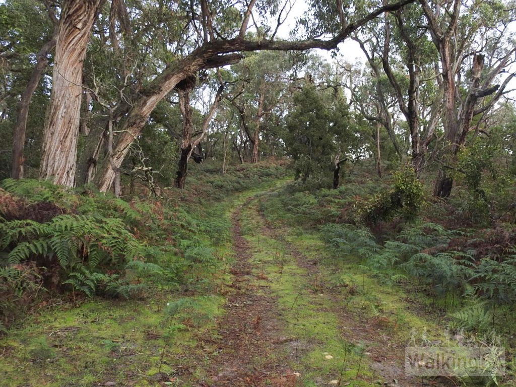 Walking along the forest trail of the Stringybark Forest Hike in Telford Scrub Conservation Park