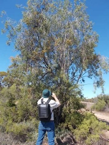 Watching some of the birdlife on the Shell Hill Reserve walking trails