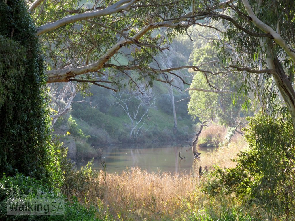 Views of the Onkaparinga River along the walk