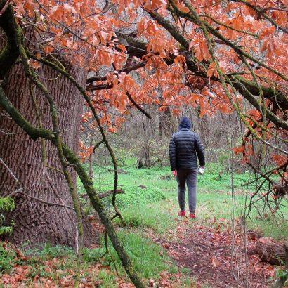 Maple Walk, Bundaleer Forest