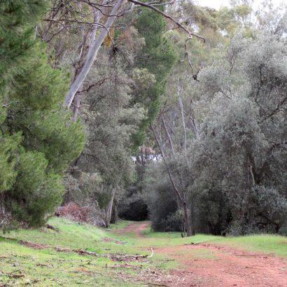 Scenic Trail, Bundaleer Forest