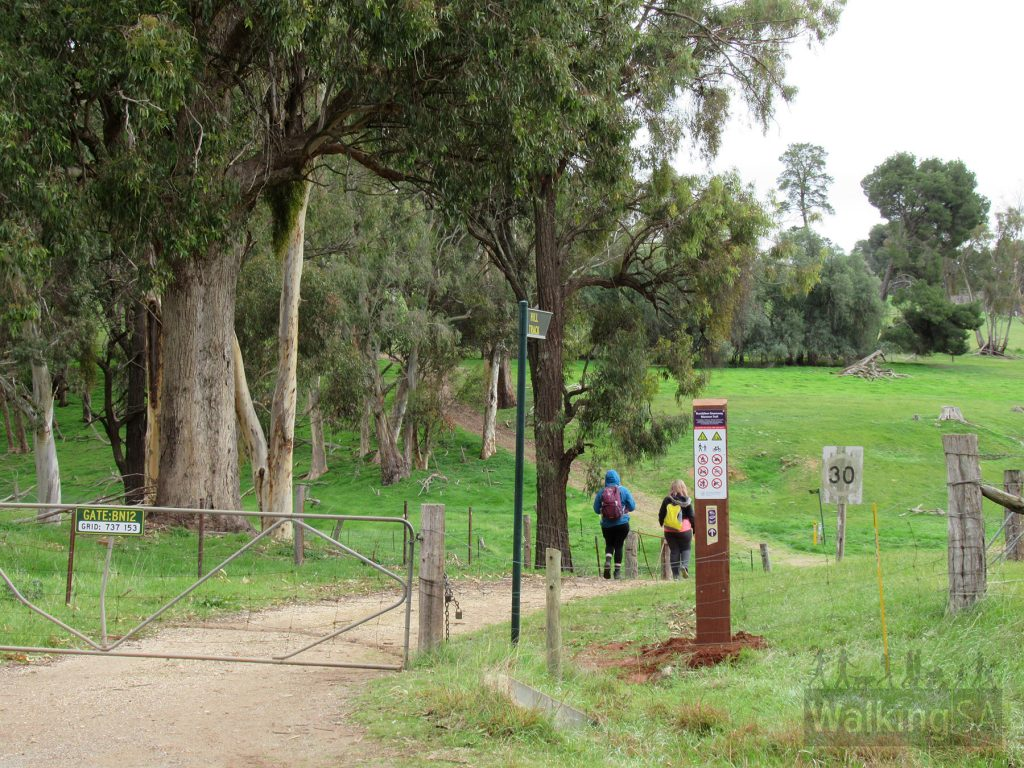 The Conservator's Trail begins from Gate BN12, also labelled with Bundaleer Greenway Mawson Trail signs, on the main Springs Road dirt road, just 150m beyond the entrance to the picnic grounds. You can park in the picnic grounds and easily walk over to the gate.