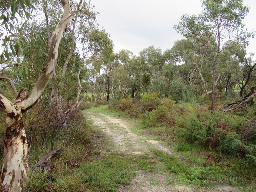The Main Track in the Manning Flora & Fauna Reserve