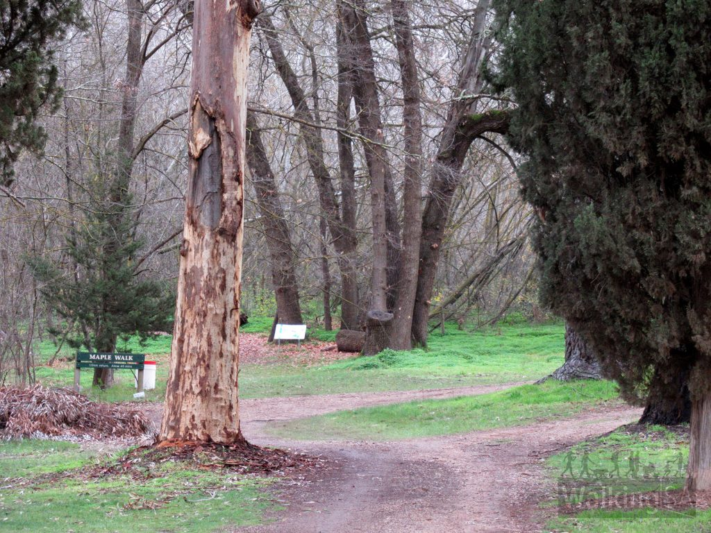 The Maple Walk trailhead is at the end of the Picnic Grounds