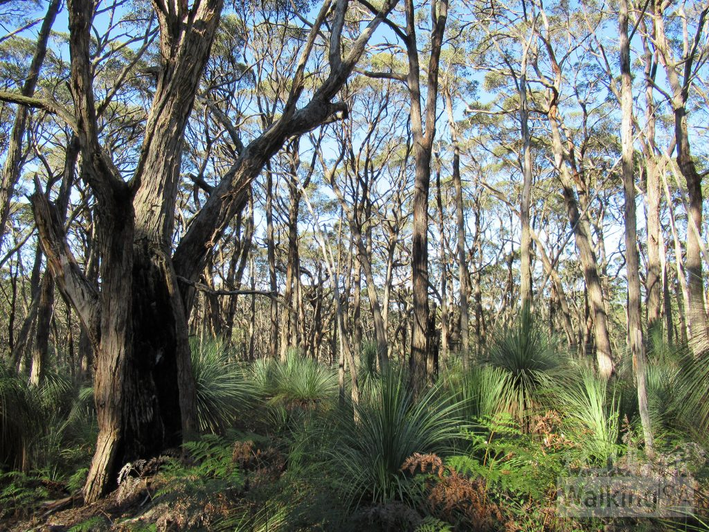 The old growth forest provides nesting areas for birds and wildlife