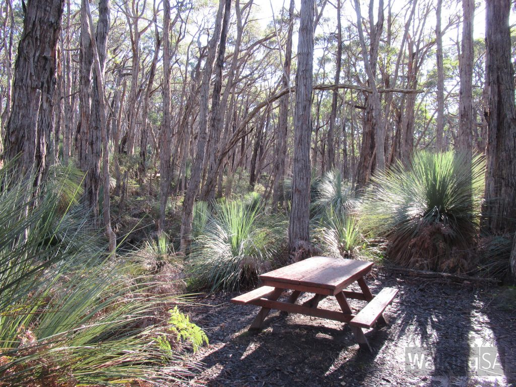 The picnic area beside the carpark on the Stringybark Loop Walk. There are two picnic tables here.