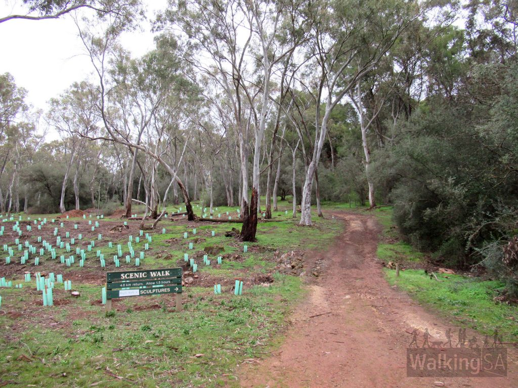 The trailhead for Sculpture Walk, Scenic Walk and Maple Walk starts to the south of the picnic ground. The Bundaleer Forest Community Areas Association (BFCAA Inc) has been busy revegetating areas.
