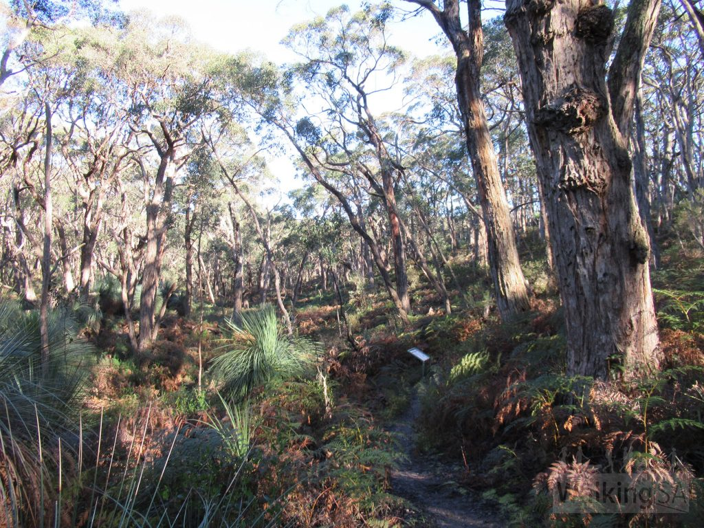 The walk follows a creek for a short distance, before returning up a hill