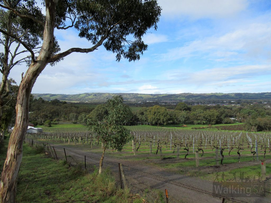 The walk up from Whitings Road, along the southern perimeter and adjoining vineyards, up to the Alex Bell Track