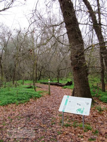 Trailhead of the Maple Walk, at the end of the Picnic Grounds