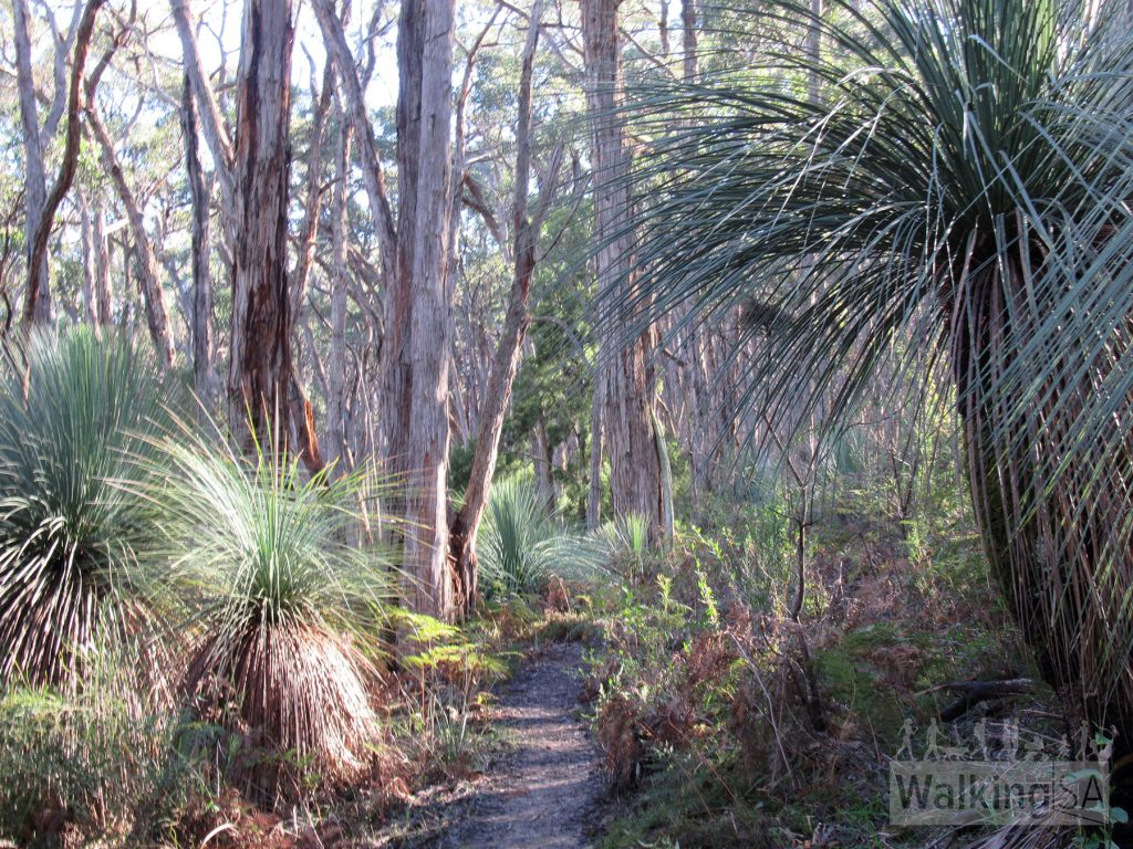Walk through the old shady growth stringybark forest, admiring the tall trees and delicate ferns