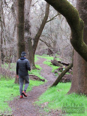 Walking along the Maple Walk