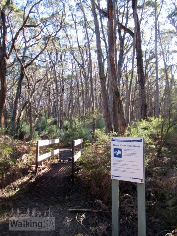 As you start the walk, you will need to clean your shoes at the cleaning station. The cleaning station is to protect this forest from phytophthora, a fungus which is killing out native vegetation.