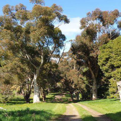 Glenthorne Loop Trail, Glenthorne National Park-Ityamaiitpinna Yarta