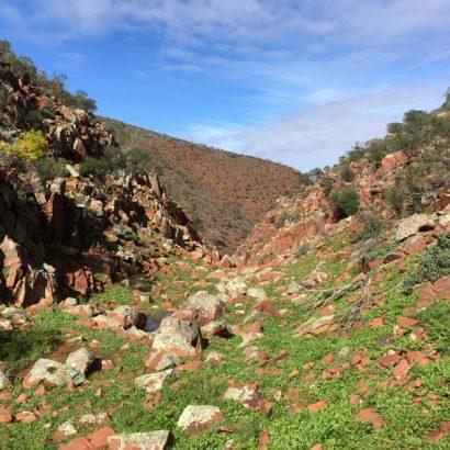 Mark Bonnin Walking Trails, Hiltaba Nature Reserve