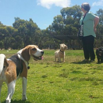 Guided Walk through North Adelaide's Parks 3, 4 and 5