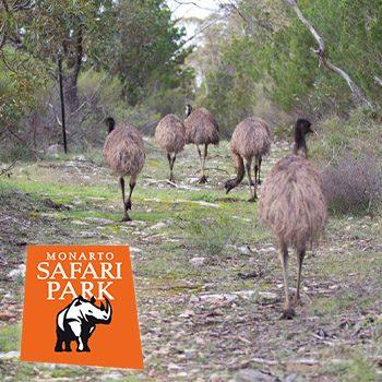Bush Walk in Monarto Safari Park