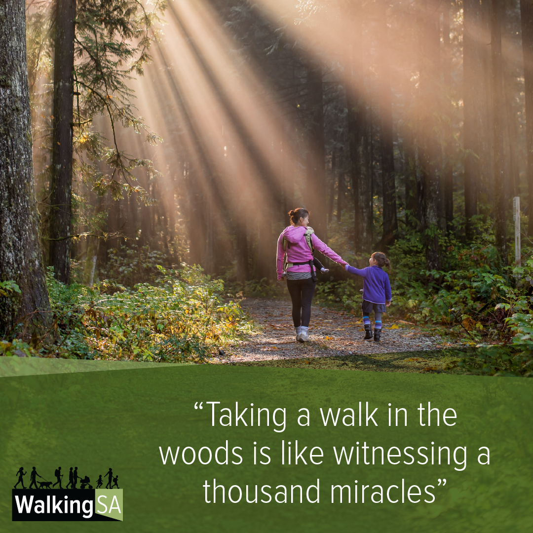 """social media tile Square 1080px x 1080px: """"Taking a walk in the woods is like witnessing a thousand miracles"""""""