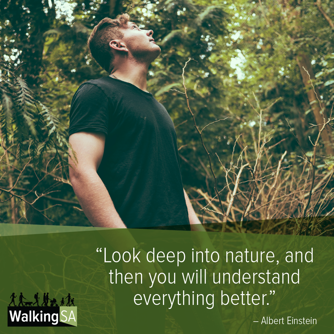 """social media tile Square 1080px x 1080px: """"Look deep into nature, and then you will understand everything better."""""""