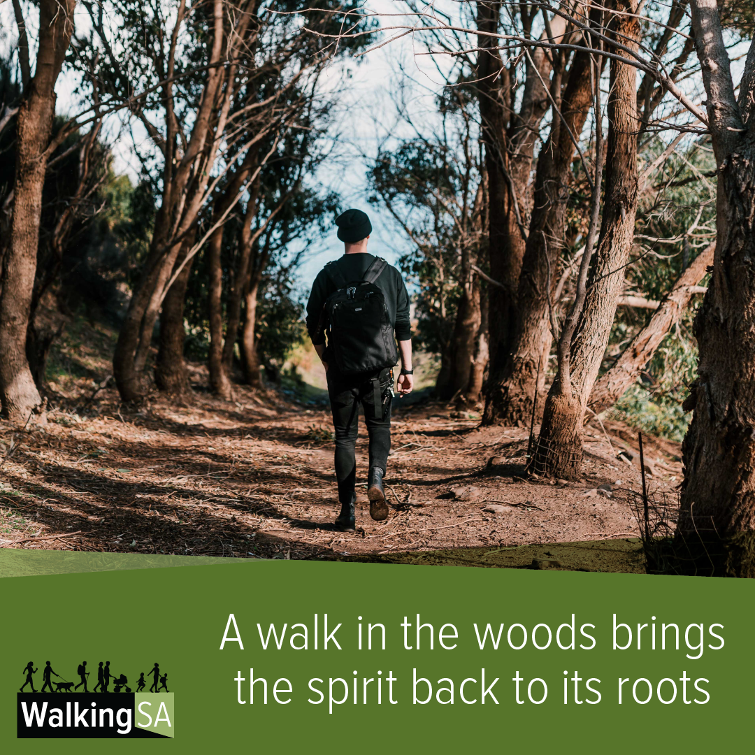 social media tile Square 1080px x 1080px: A walk in the woods brings the spirit back to its roots