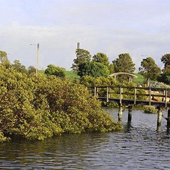 A Mangrove-inspired Labyrinth Walk, Garden Island – Nature Festival