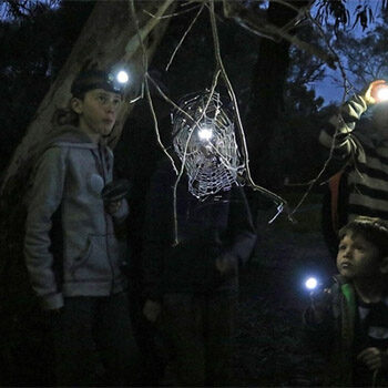 Southern Parklands – Nature by Night – Nature Festival