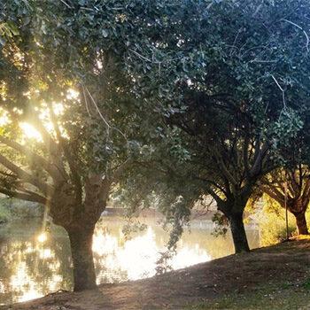 Guided Walk through Bonython Park / Tulya Wardli – Nature Festival