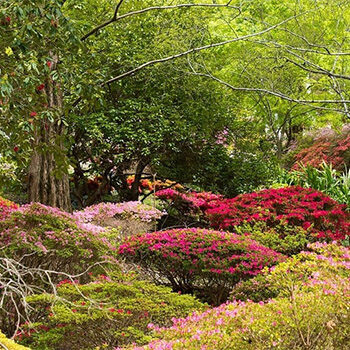 Guided Tour through Rhododendron Gully, Mt Lofty – Nature Festival
