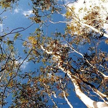Immersive Adventure Walk in the Adelaide Hills – Nature Festival