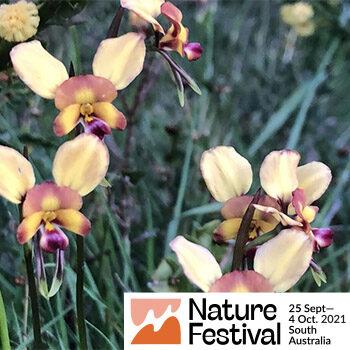 Orchid Walk @ The Sanctuary at Yundi (near Mt Compass) – Nature Festival