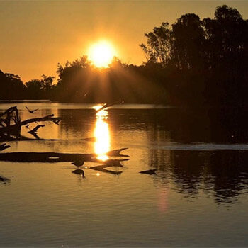 Loxton Riverfront Reserve – Getting Curious with Water For Nature – Nature Festival