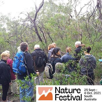 August Pelzer Park Lands walk – Nature Festival