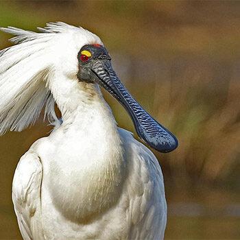 Birdwatching stroll around the Oaklands Wetland – Nature Festival