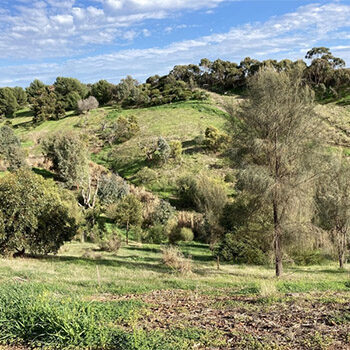 Field River Kaurna Walk on Country – Nature Festival