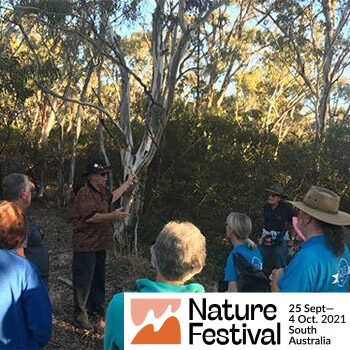 A series of Walks in Wadmore Park/Pulyonna Wirra, Athelstone – Nature Festival