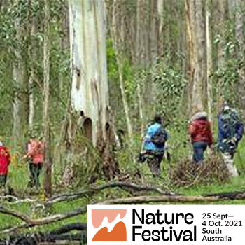 Wine and Wildflower Walk at Sinclairs Gully, Norton Summit – Nature Festival